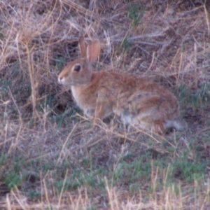 rabbitMay2506a-hr