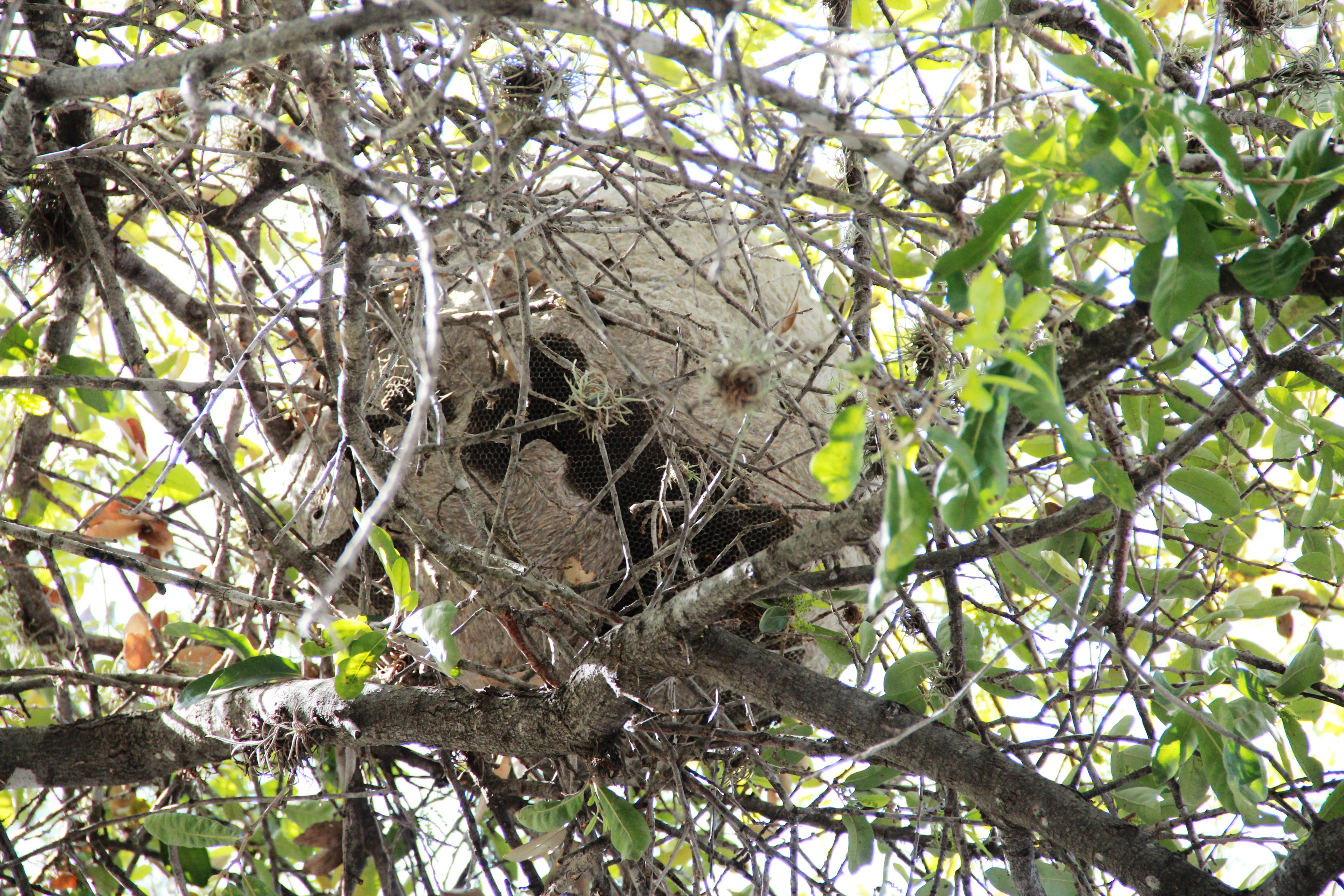 how honeybees choose a nest site essay Honeybee waggle dance error: adaption or constraint unravelling the complex dance and the honeybees (12 species all a good-quality nest site will better.