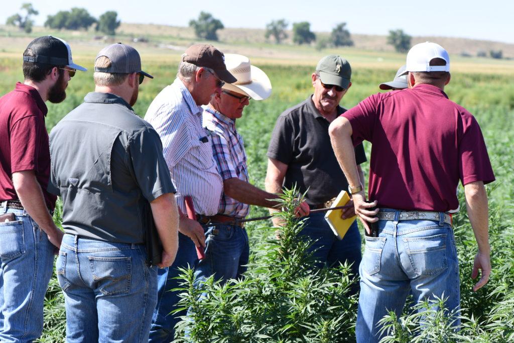Soil measurement on a hemp farm