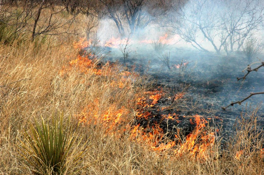 Flames crawl across a pasture